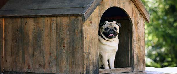 ¿Cómo hacer una casa para perros?