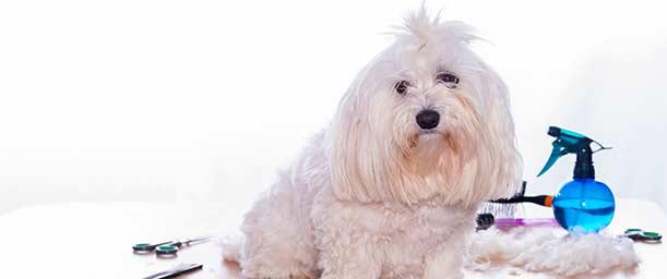 ¿Cómo aprender peluquería canina?