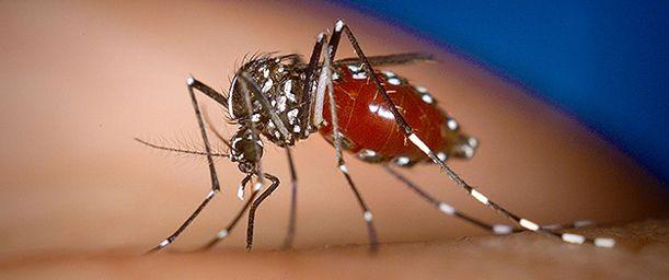 Qué es el Chikungunya