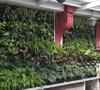 Origen, ventajas y desventajas de la jardinería vertical