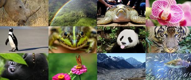 Qué es Biodiversidad