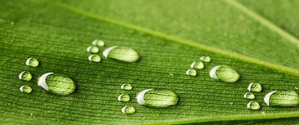 ¿Cómo calcular nuestra huella ecológica?