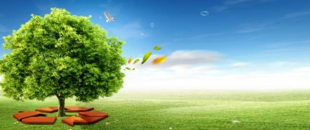 ¿De qué manera se relaciona la ecología con la protección animal?