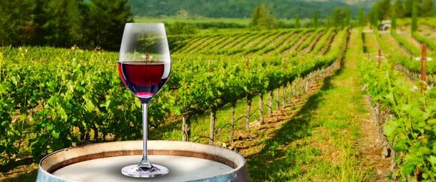 El vino, historia como elemento clave de civilizaciones.