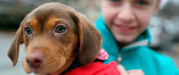 Origen de la relación del hombre con su mejor amigo -el perro-