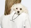 Esterilización y castración de perros y gatos