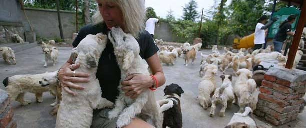 Funciones de los refugios de mascotas