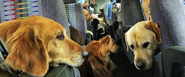 Consejos para viajar con nuestras mascotas