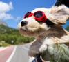 De Vacaciones con Nuestros Perros