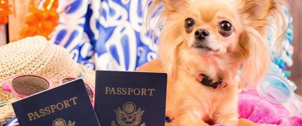 Trámites para Viajar con Animales fuera del Territorio Nacional