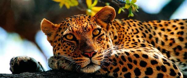 Por qué es importante no comprar fauna protegida