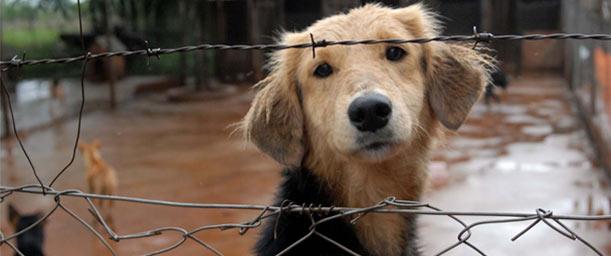 12 Razones para adoptar un perro