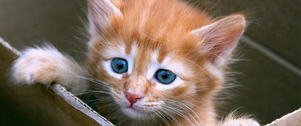 12 Razones para adoptar un gato