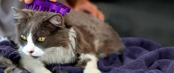 La higiene diaria del gato