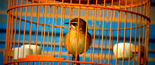 La higiene diaria de las aves