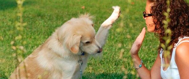El entrenamiento canino responsable