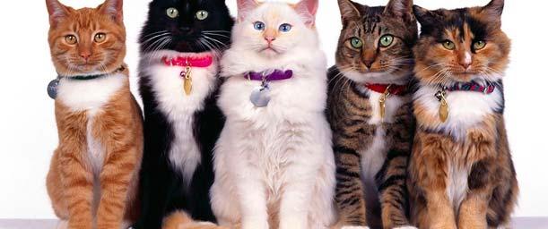 La evolución de la psicología felina