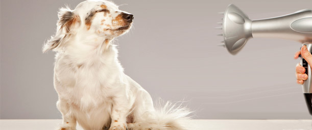 La profesión del peluquero canino y felino