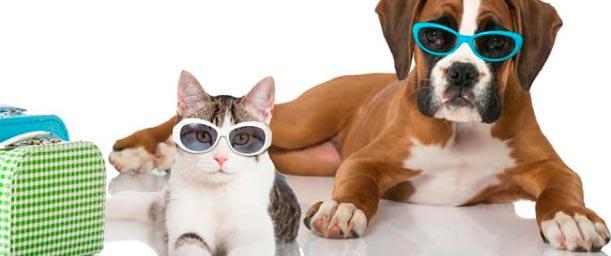 Considerando dejar a nuestra mascota en un hospedaje