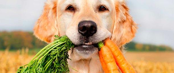 La alimentación para perros según su edad