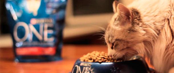 La alimentación para gatos según su edad