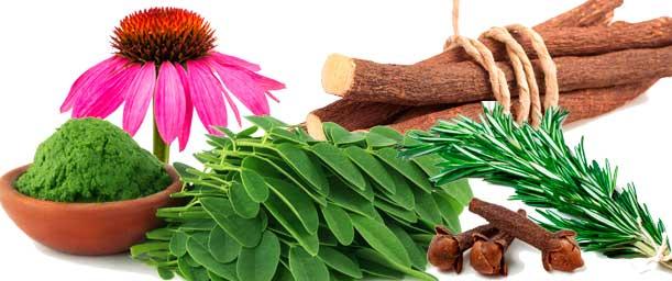 Elementos naturales para fortalecer el sistema inmunológico