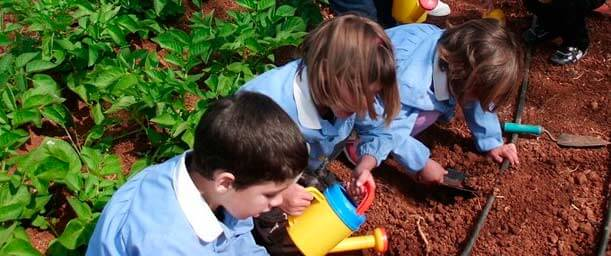 Consejos para hacer un huerto en la escuela