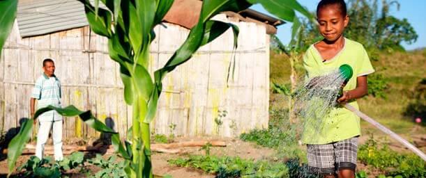 Importancia del agua para los huertos y la siembra