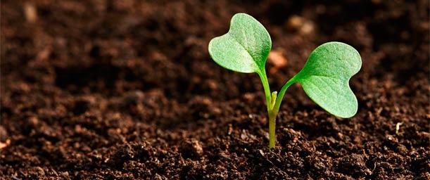 Días del año que celebra la ecología